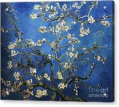 Almond Tree In Blossom Acrylic Print