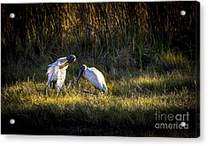 Almost Bed Time Acrylic Print