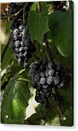 Almost Harvest Time Acrylic Print by Michael Flood
