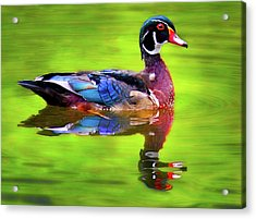 Acrylic Print featuring the photograph Almost Perfect Wood Duck by Jean Noren