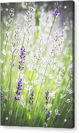 Acrylic Print featuring the photograph Almost Wild..... by Russell Styles