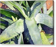 Aloe Acrylic Print by Eunice Olson