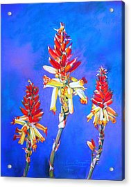Acrylic Print featuring the painting Aloe Flower Spike by M Diane Bonaparte