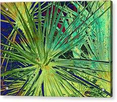 Aloe Vera Plant Acrylic Print by Susanne Van Hulst