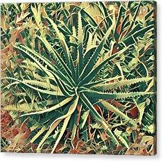 Aloha Aloe In Puna Acrylic Print