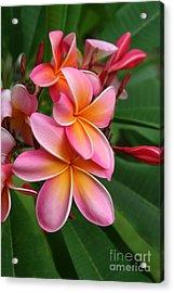 Aloha Lei Pua Melia Keanae Acrylic Print