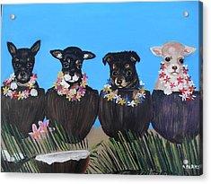 Aloha Teacup Chihuahuas Acrylic Print