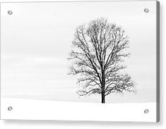 Alone On A Hill Acrylic Print
