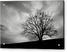 Alone On A Hill In Black And White Acrylic Print