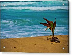 Alone On The Beach Acrylic Print