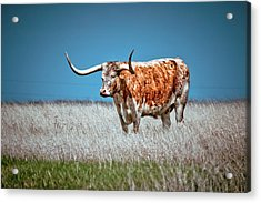 Acrylic Print featuring the photograph Alone On The Trail by Linda Unger