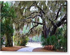 Acrylic Print featuring the photograph Along The Path by Kathryn Meyer
