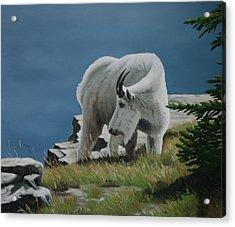 Along The Ridge Acrylic Print by Jennifer Batey