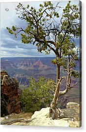 Acrylic Print featuring the photograph Along The Rim by Gordon Beck
