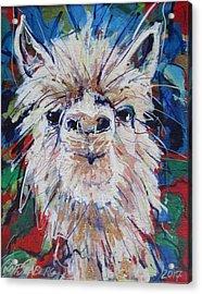 Alpaca Crazed Acrylic Print