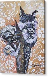 Alpaca Do-bee  Brothers Acrylic Print