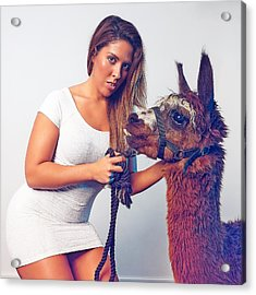 Alpaca Mr. Tex And Breanna Acrylic Print by TC Morgan
