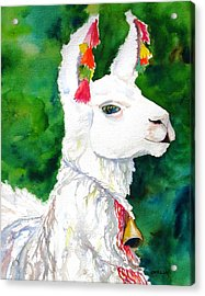 Alpaca With Attitude Acrylic Print by Carlin Blahnik