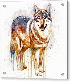 Alpha Wolf Acrylic Print by Marian Voicu