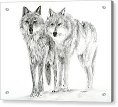 Acrylic Print featuring the drawing Alphas by Meagan  Visser