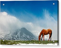 Alpine Equine Acrylic Print