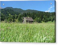Alpine Meadow  Acrylic Print by Carol Groenen