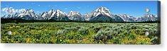 Alpine Meadow Teton Panorama II Acrylic Print by Greg Norrell