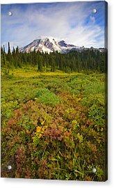Alpine Meadows Acrylic Print by Mike  Dawson