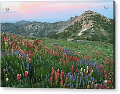 Alpine Wildflowers And View At Sunset Acrylic Print by Brett Pelletier