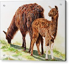 Altiplano Natives Acrylic Print by Monica Carrell