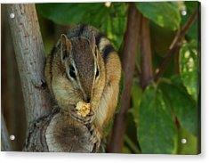 Acrylic Print featuring the photograph Alvin Eating 1 by Brian Hale