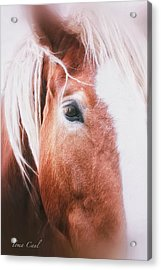 Always Dream Signed Acrylic Print