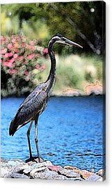 Always Looking To Eat Acrylic Print
