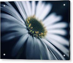 Always Searching For A Signal Acrylic Print