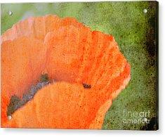 Always Acrylic Print by Traci Cottingham