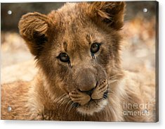 Acrylic Print featuring the photograph Am I Cute? by Christine Sponchia