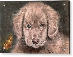 Irish Setter Puppy Dog And Orange Butterfly Acrylic Print by Remy Francis