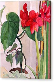 Amaryllis And Begonia Acrylic Print by Nancy Watson