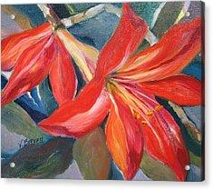 Amaryllis In Spring Acrylic Print