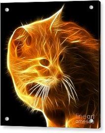 Amazing Cat Portrait Acrylic Print by Pamela Johnson