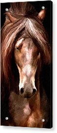 Acrylic Print featuring the painting Amazing Horse by James Shepherd