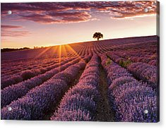 Amazing Lavender Field At Sunset Acrylic Print by Evgeni Dinev