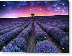 Amazing Lavender Field With A Tree Acrylic Print by Evgeni Dinev