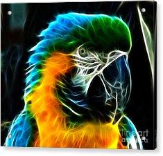 Amazing Parrot Portrait Acrylic Print by Pamela Johnson