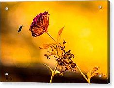 Amazon Cherry Acrylic Print