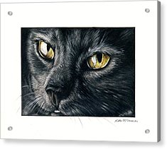 Amber Eyes Acrylic Print