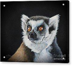 Amber Eyes......lemur Acrylic Print