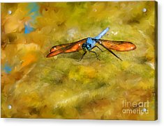 Amber Wing Dragonfly Acrylic Print