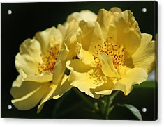 Amber Yellow Country Rose Acrylic Print