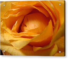 Amber's Rose Acrylic Print